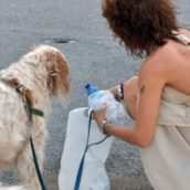 Genova, obbligo di pulire la pipì dei cani