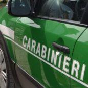 Controlli dei carabinieri del Gruppo Forestale di Avellino