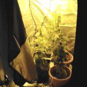 Apice, 23enne arrestato dai Carabinieri per coltivazione di piante di marijuana