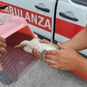Controlli da parte dei Carabinieri del Gruppo Forestali di Avellino