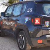 Monteforte Irpino, cinghiale morto a seguito di cattura con laccio in acciaio : indagano i Carabinieri Forestali