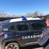 Pellet contaminato da piombo e azoto, scatta il sequestro dei Carabinieri Forestali