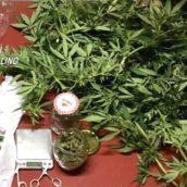 Santo Stefano del Sole, 18enne sorpreso in possesso di marijuana: arrestato dai Carabinieri