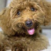 Cane positivo al Covid, è il primo caso in Italia