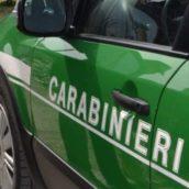 Quadrelle, taglio abusivo di alberi in zona protetta: 70enne denunciato dai Carabinieri