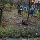 Cesinali, cane investito e finito in un canale di scolo: salvato dai caschi rossi