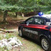 Taglio abusivo di alberi in area protetta: denunciate due persone a Serino