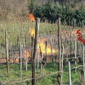 Montefredane, perdita di gas fa bruciare il vigneto