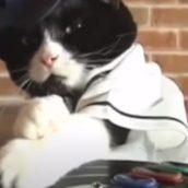 Chiamano la Polizia per una festa rumorosa ma è il gatto che ascolta la musica