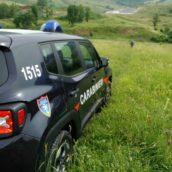 Contrada, sequestrate dai Carabinieri Forestali 7 piante di cannabis e relativi fertilizzanti. Indagini in corso